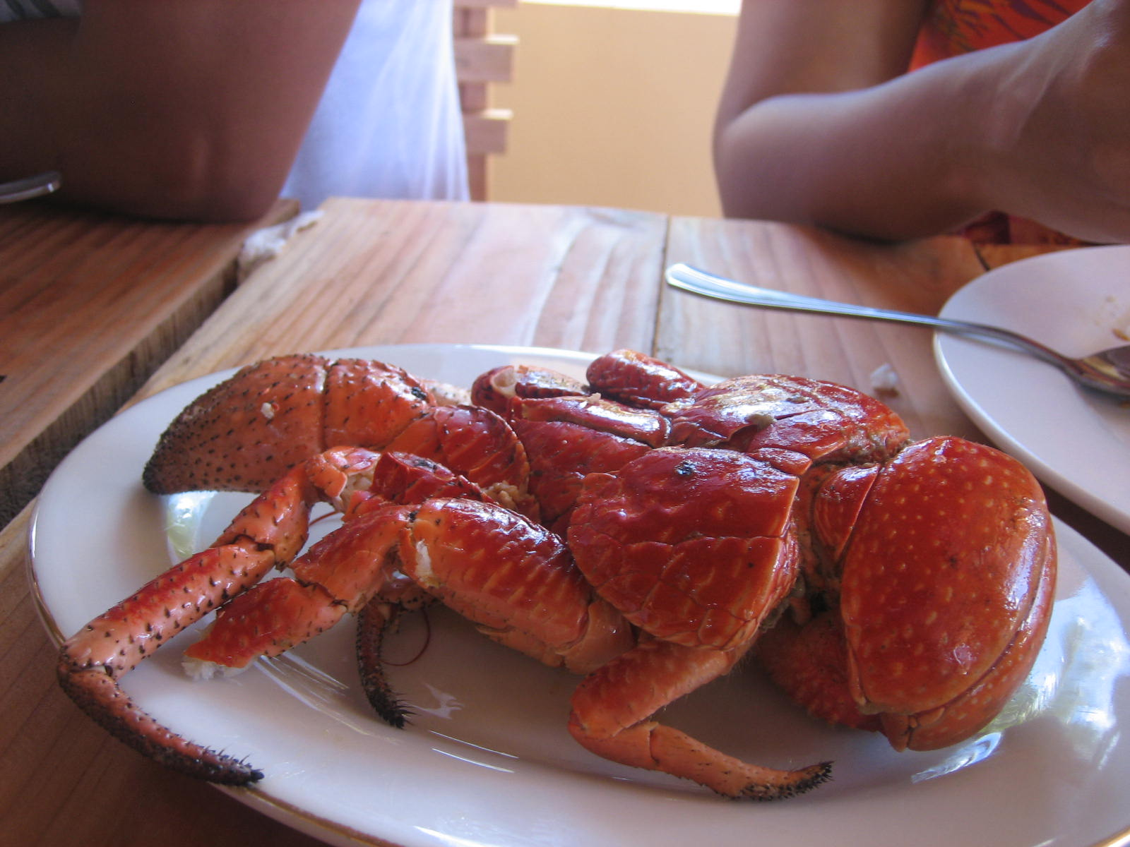 Coconut Crab   Domestic Urbanite