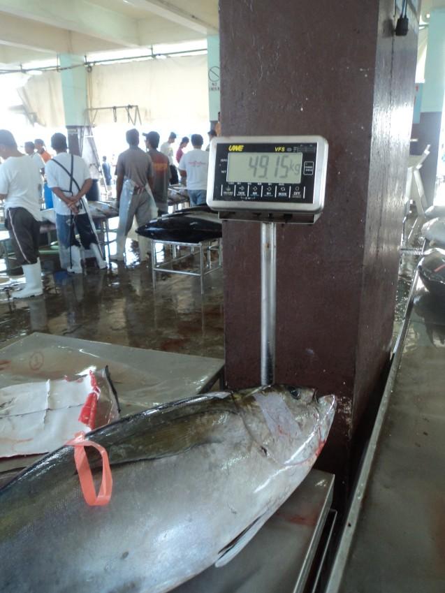 The 50 Kilo fish