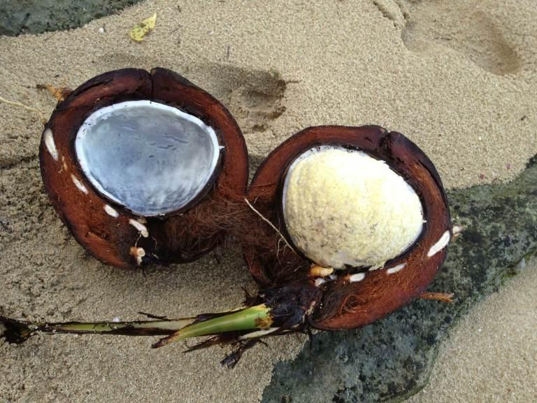 Tumbong