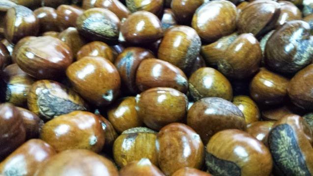Shiny chestnuts