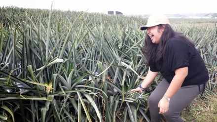 Picking my own pineapple :)