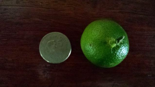 Twice as big as a 5 peso coin